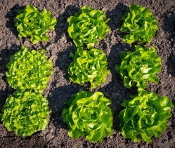 salad-3419088_960_720